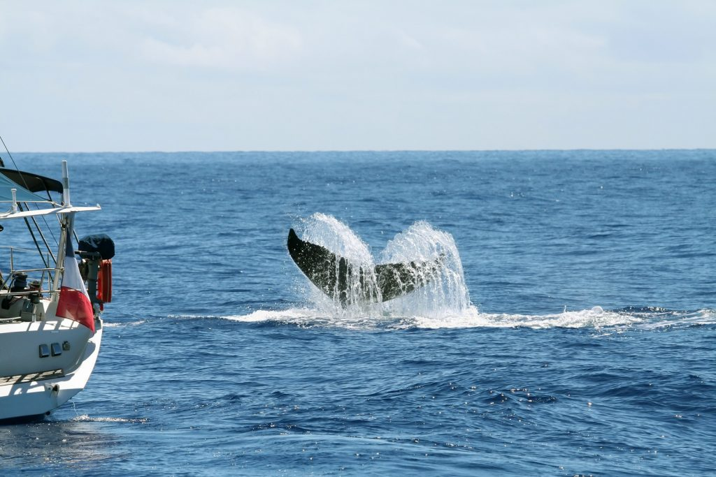 back end of a sailboat next to a tail of a whale in the ocean